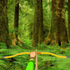 Wild Forest Targets juego